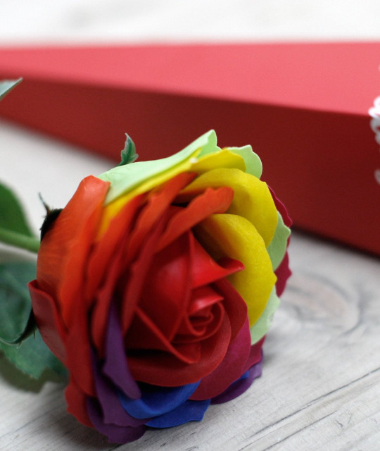Одиночная роза - радужная роза